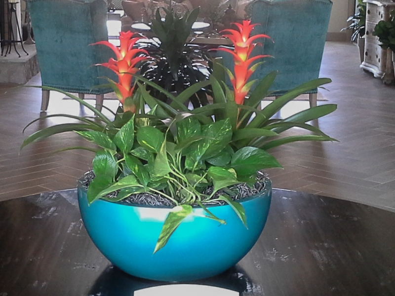 Sedgefield-Interior-Landscapes_Containers-51