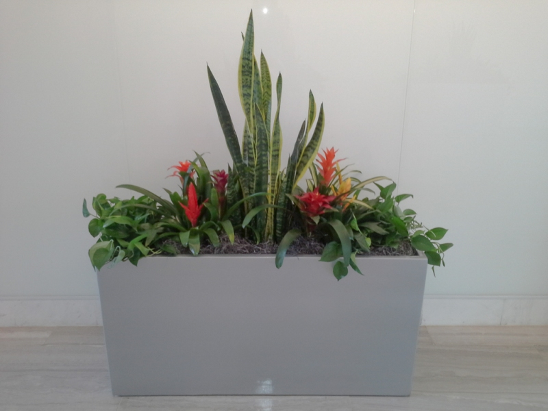 Sedgefield-Interior-Landscapes_Containers-54