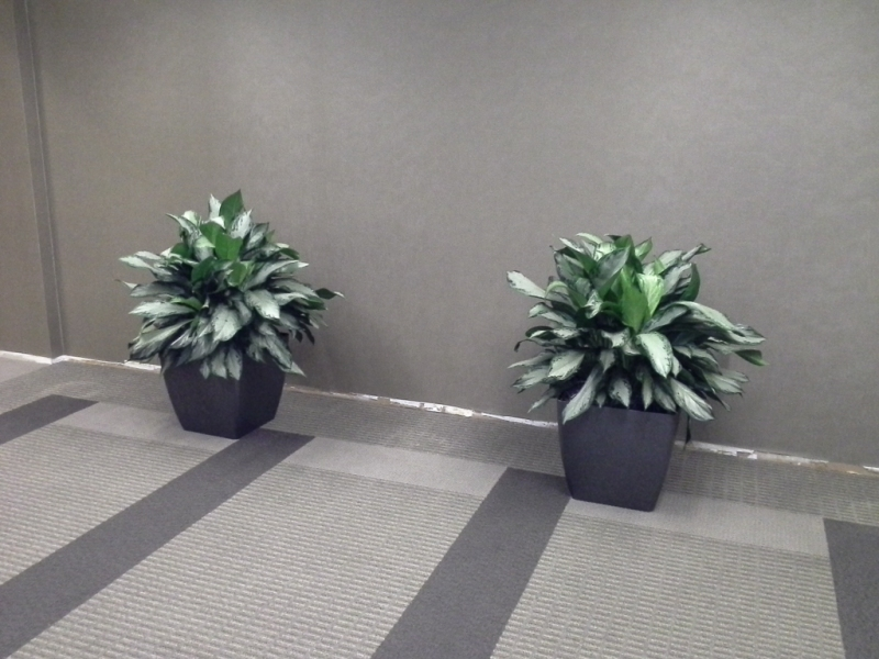 Sedgefield-Interior-Landscapes_Containers-57