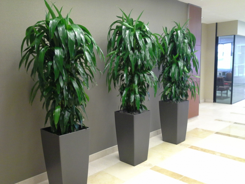 Sedgefield-Interior-Landscapes_Containers-58