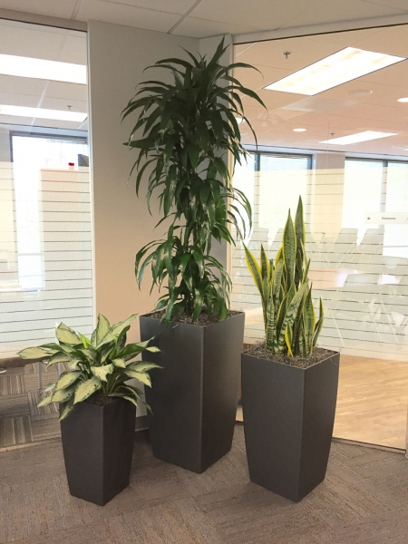 Sedgefield-Interior-Landscapes_Containers-67