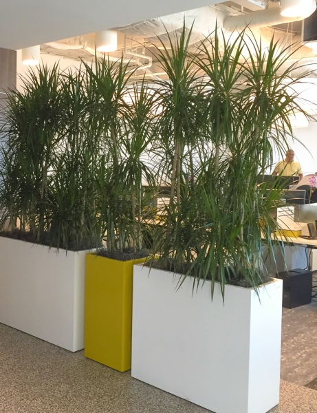 Sedgefield-Interior-Landscapes_Containers-75