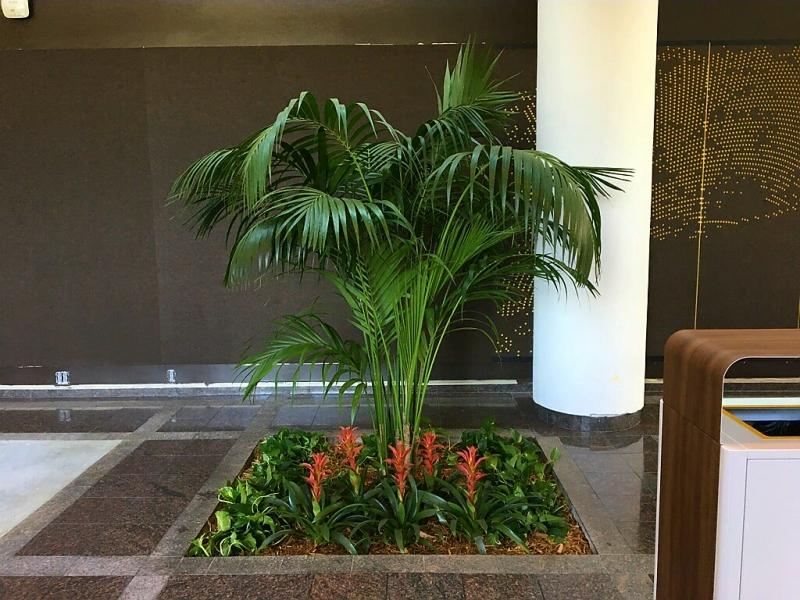 Sedgefield-Interior-Landscapes_Planters-49