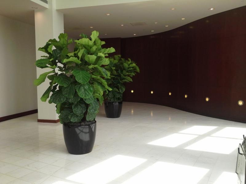 Sedgefield-Interior-Landscapes_Planters-9