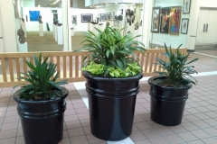 Sedgefield-Interior-Landscapes_Containers-59