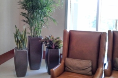 Sedgefield-Interior-Landscapes_Containers-60