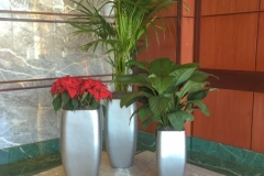 Sedgefield-Interior-Landscapes_Containers-65