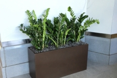 Sedgefield-Interior-Landscapes_Containers-66