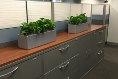 Sedgefield-Interior-Landscapes_Containers-68