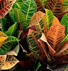Sedgefield Interior Landscapes_Seasonal Color-19