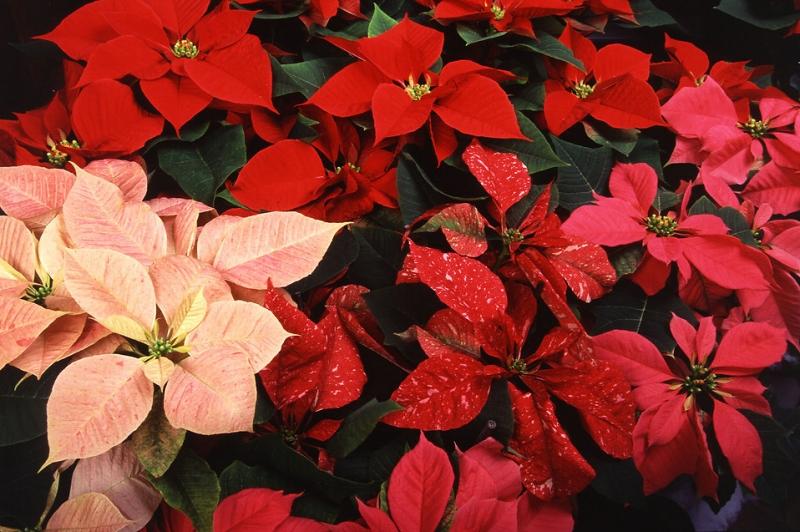 Sedgefield Interior Landscapes_Seasonal Color-25