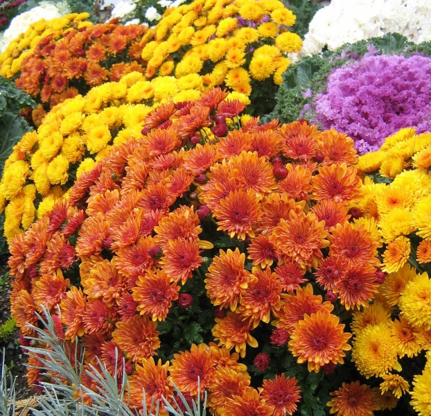 Sedgefield Interior Landscapes_Seasonal Color-3