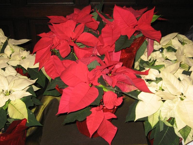 Sedgefield Interior Landscapes_Seasonal Color-4