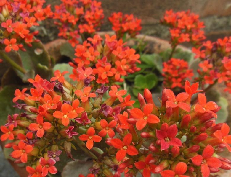 Sedgefield Interior Landscapes_Seasonal Color-8