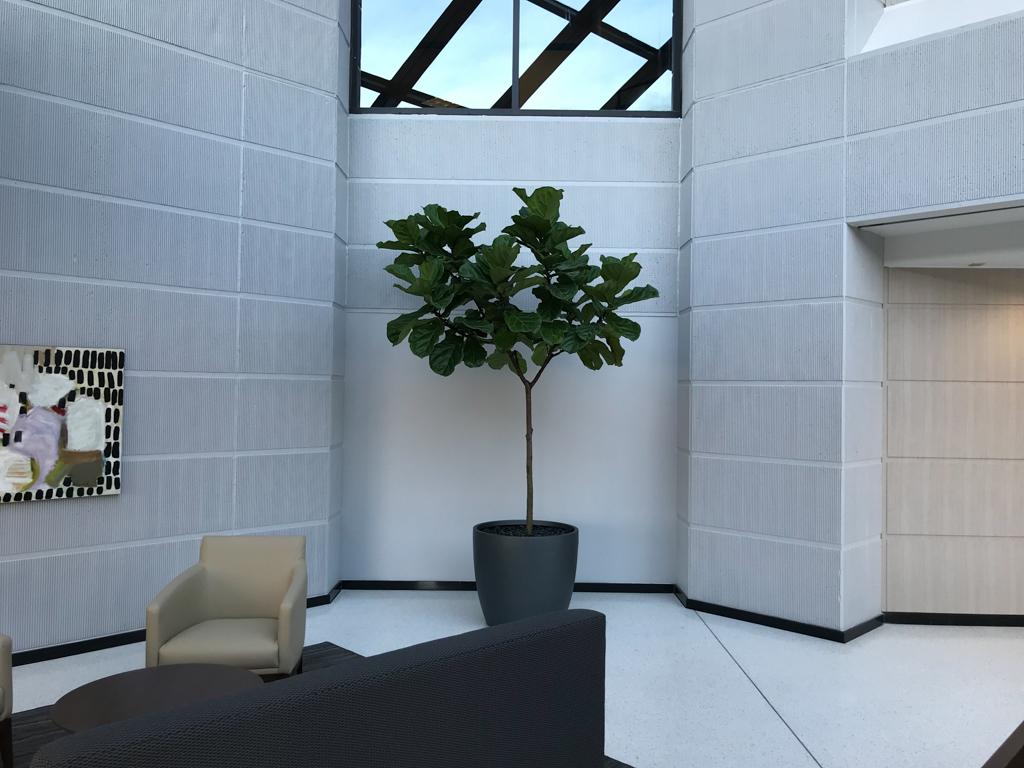 Sedgefield Interior Landscapes_Planters-73