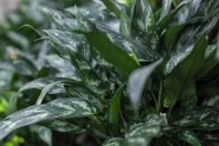1_Sedgefield-Interior-Landscapes_Indoor-Plants-10-Copy