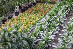 1_Sedgefield-Interior-Landscapes_Indoor-Plants-20