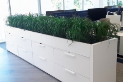 Sedgefield-Interior-Landscapes_Containers-76