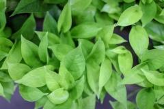 Sedgefield-Interior-Landscapes_Indoor-Plants-14-Copy