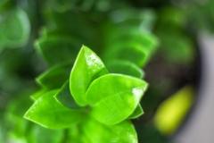 Sedgefield Interior Landscapes_Indoor Plants-15