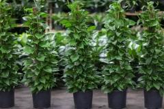 Sedgefield Interior Landscapes_Indoor Plants-3 - Copy