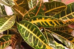 Sedgefield-Interior-Landscapes_Indoor-Plants-50