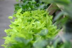 Sedgefield Interior Landscapes_Indoor Plants-9 - Copy