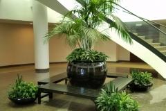 Sedgefield Interior Landscapes_Planters-13