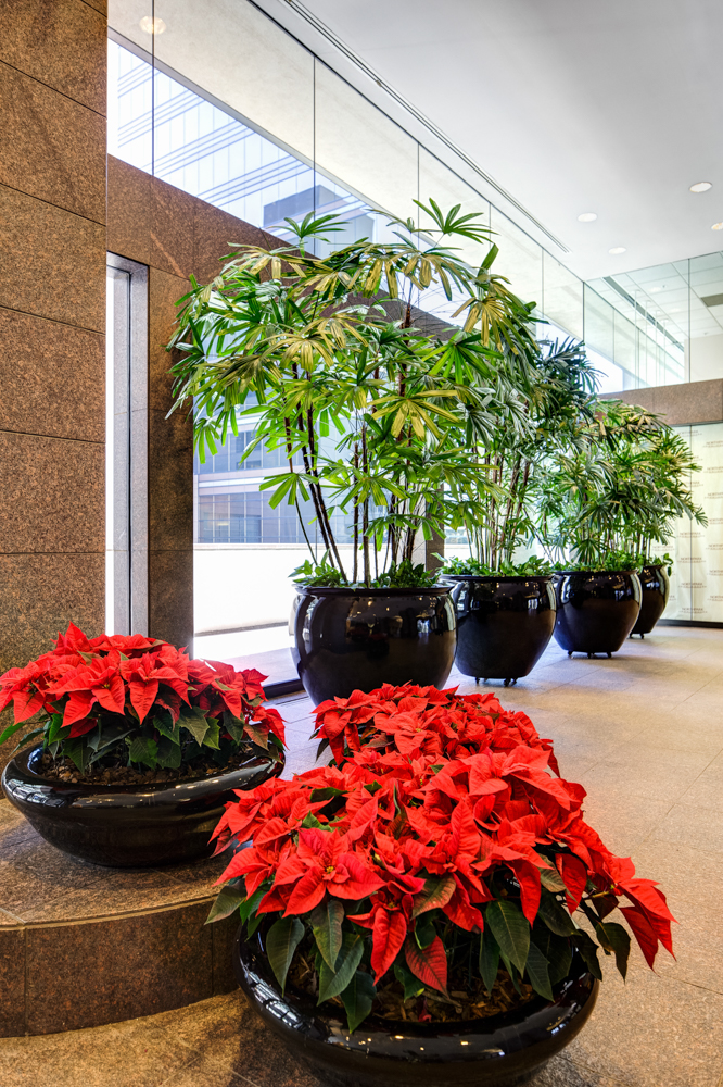 Sedgefield Interior Landscapes_Seasonal Color-7