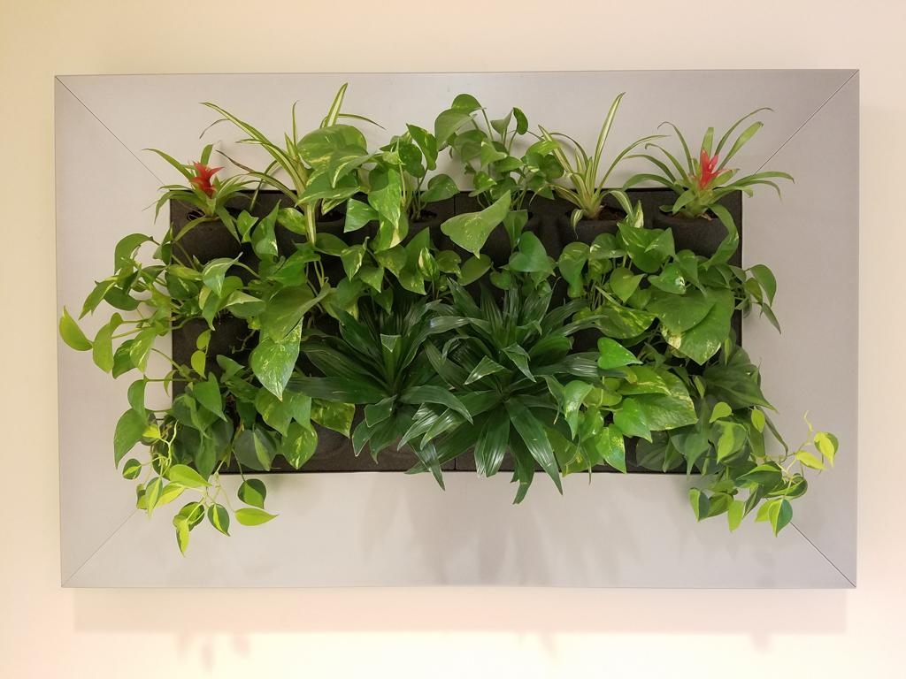 Sedgefield Interior Landscapes_Living Walls-10