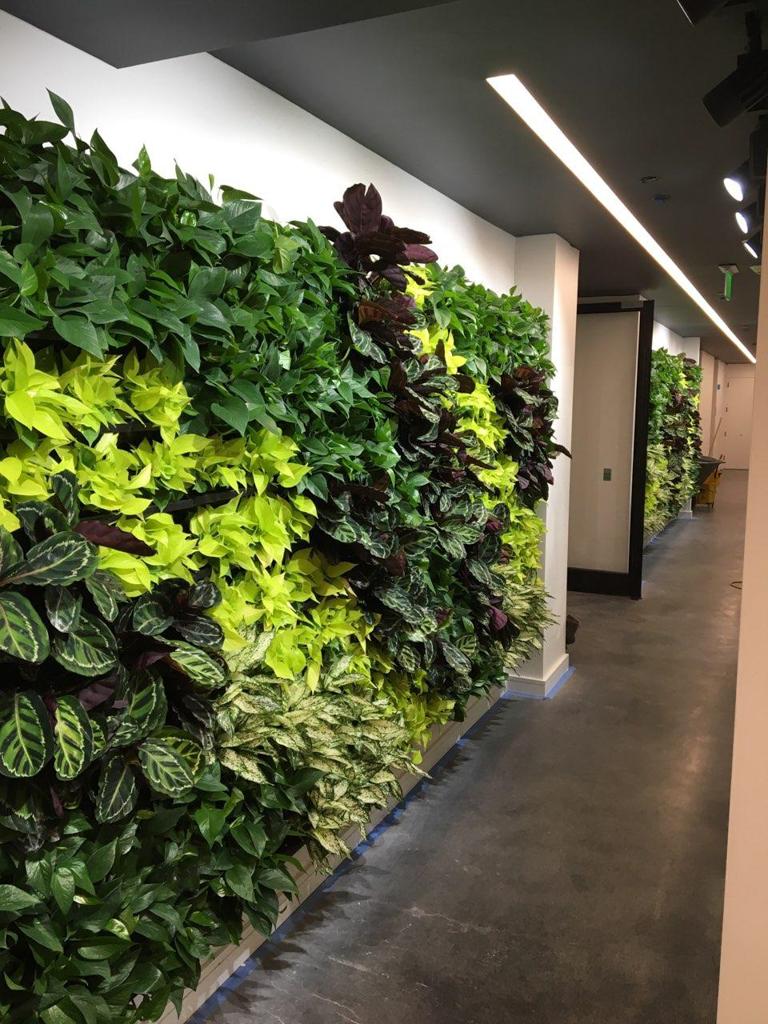 Sedgefield Interior Landscapes_Living Walls-16