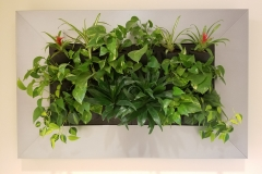 Sedgefield Interior Landscapes_Living Walls-10