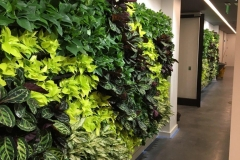 Sedgefield Interior Landscapes_Living Walls-16