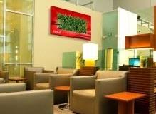 Sedgefield-Interior-Landscapes_Living-Walls-17