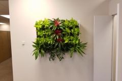 Sedgefield Interior Landscapes_Living Walls-4