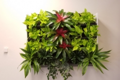 Sedgefield Interior Landscapes_Living Walls-5