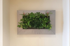 Sedgefield Interior Landscapes_Living Walls-8