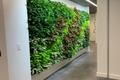 Sedgefield-Interior-Landscapes_Living-and-Moss-Walls-6