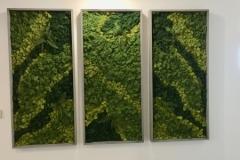 Sedgefield-Interior-Landscapes_Moss-Wall_Installation_8449