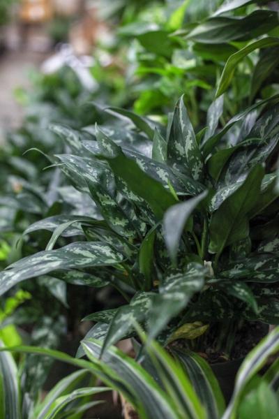 Sedgefield-Interior-Landscapes_Indoor-Plants-10