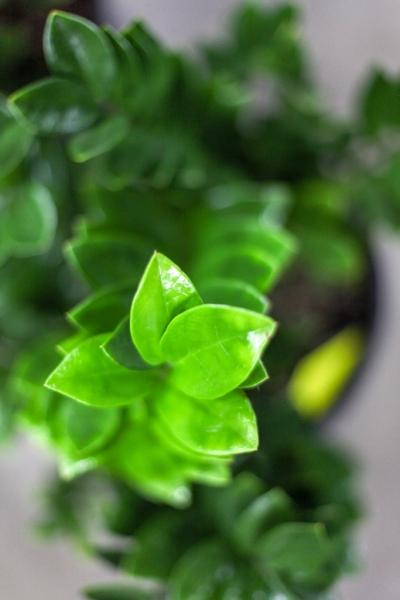Sedgefield-Interior-Landscapes_Indoor-Plants-15