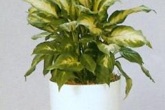 Sedgefield-Interior-Landscapes_Plant-High-Light-10