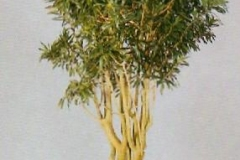 Sedgefield-Interior-Landscapes_Plant-High-Light-13