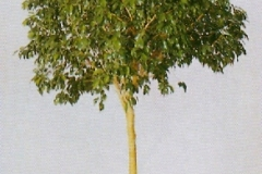 Sedgefield-Interior-Landscapes_Plant-High-Light-16