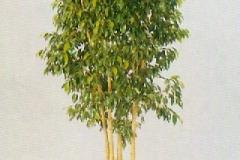 Sedgefield-Interior-Landscapes_Plant-High-Light-17