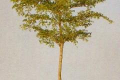 Sedgefield-Interior-Landscapes_Plant-High-Light-2