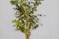 Sedgefield-Interior-Landscapes_Plant-High-Light-3