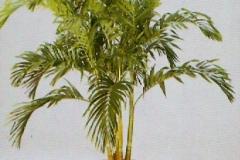 Sedgefield-Interior-Landscapes_Plant-High-Light-5
