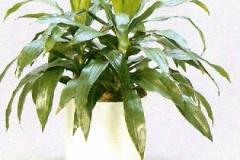 Sedgefield-Interior-Landscapes_Plant-Low-Light-10