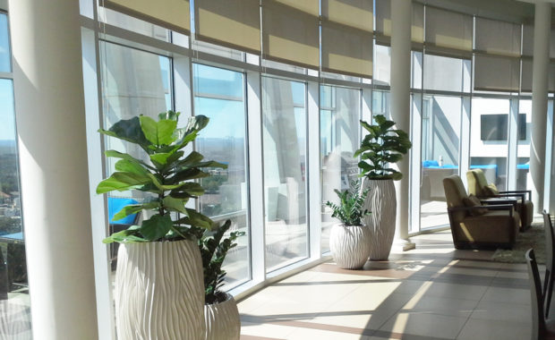 Sedgefield Interior Landscapes_Planters and Containers